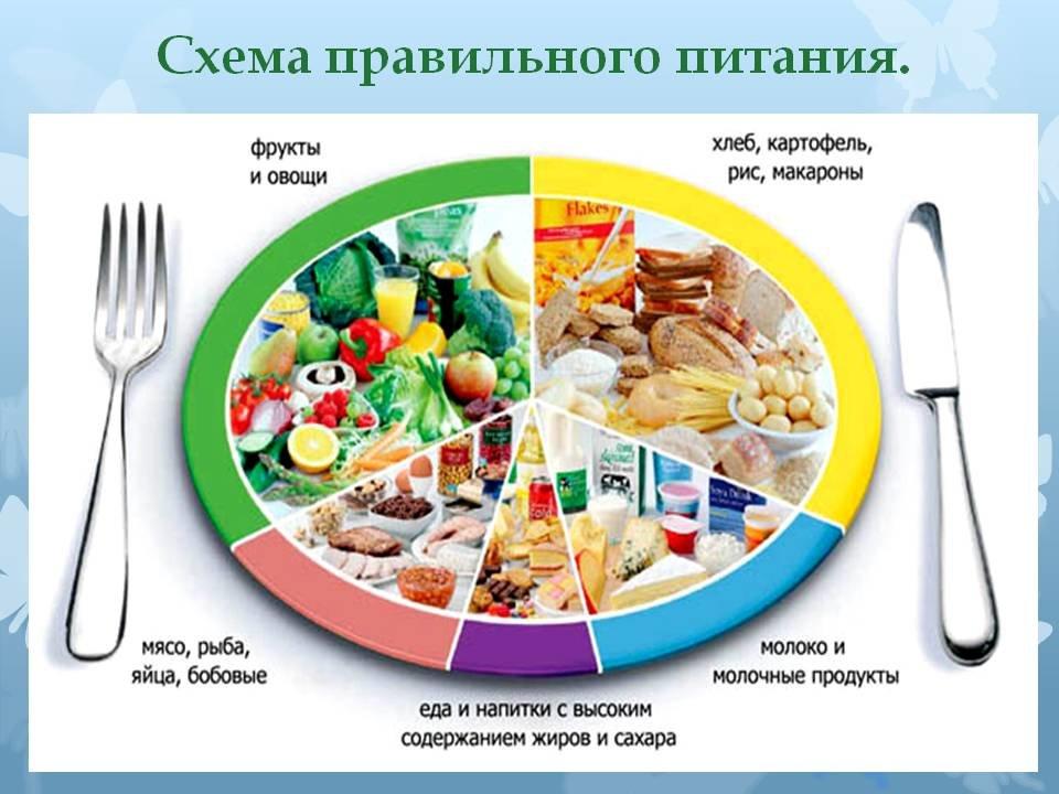 bdb2cd359399 Согласно схеме правильного питания основной рацион должны составлять овощи  и фрукты. Все калорийные продукты лучше употребить в первой половине дня,  ...